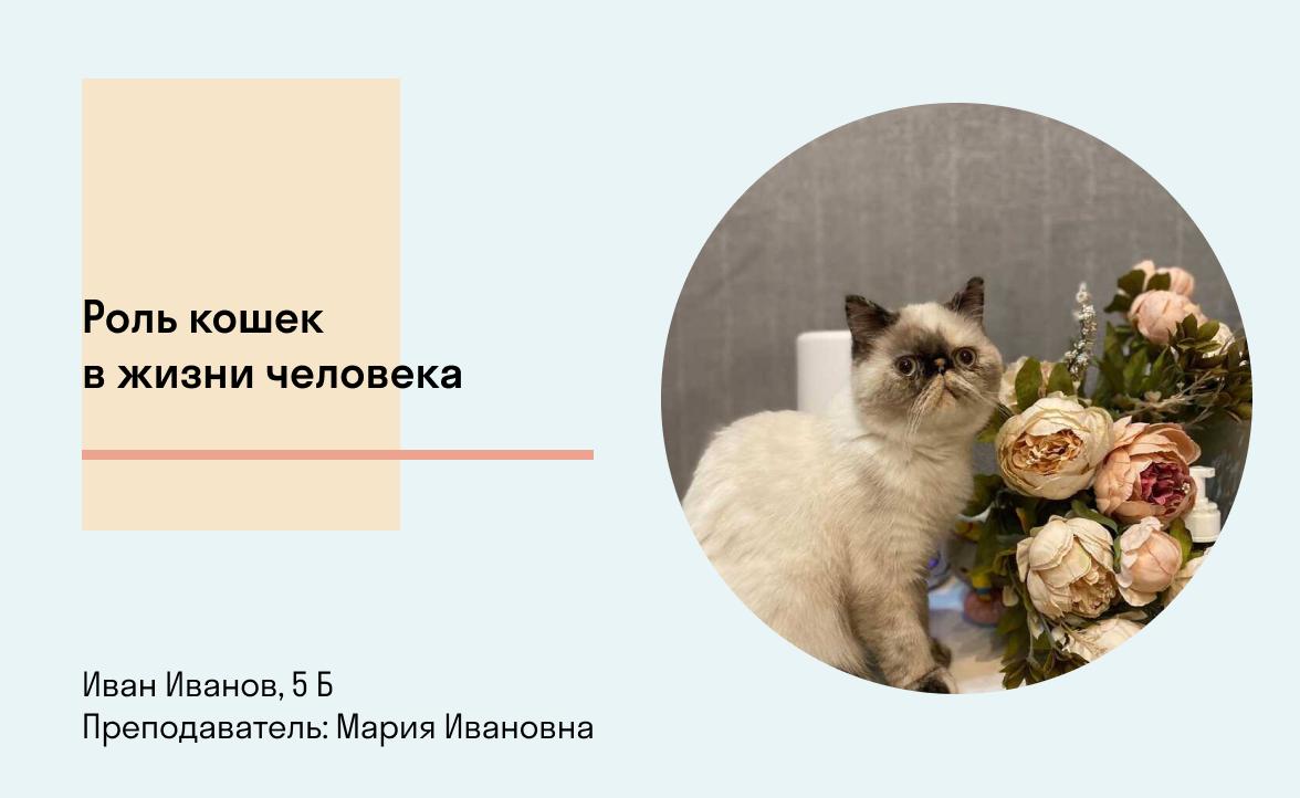 Фото Роль кошек в жизни человека